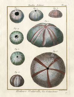 Shell Prints from Lamarck 1782-1832