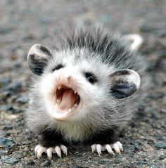 Possumly the cutest one I've ever seen!