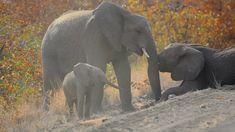 Playful Elephants seen in Kruger National Park