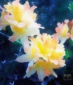 Azaelia, water color