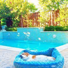 Narellan Pools Pinto Pool In Grey Quartz Narellanpoolsinspiration Narellan Pools Pinto Pool
