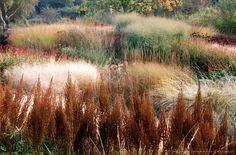 Image Detail for - grass & perennial garden: pensthorpe millenium garden, norfolk, designed by piet oudolf, owner bill makins