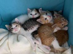 Kitten zu vergeben - Hauskatze, Bauernhofkatze Cats, Animals, Forgiveness, Animales, Gatos, Animaux, Animal, Cat, Animais