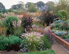 The self-seeding annual Pennisetum setaceum stands at the front of this view, next to a raised bed that gives drainage to plants that hate t...