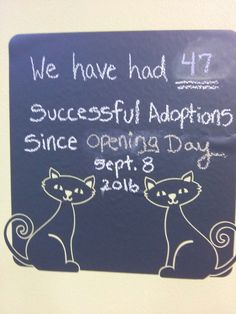 47 adoptions and counting...orlando fl cat cafe