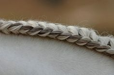 love this braid in the mane