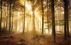 391 Herfst Bos in de Ochtend 400x280 - Bomen Fotobehang &lijm