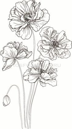 New art dessin fleur ideas Flower Line Drawings, Simple Line Drawings, Flower Sketches, Art Sketches, Pencil Drawings, Art Drawings, Drawing Flowers, Watercolor Flowers, Paintings