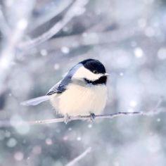 Naples Snowbirds http://www.naplessnowbirds.com/