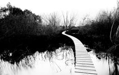 I took a ton of different photos while walking this path in Glenorchy, but this one did not look so great in color. It was curious to me because there was something about the photo that I liked… but it looked so dull in color. And then I realized it was the shape and the contrast that was most interesting! - Glenorchy, New Zealand - Photo from #treyratcliff Trey Ratcliff at http://www.StuckInCustoms.com