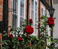 Røde roser i Assens #visitfyn #fyn #nature #nature_perfection #naturelovers #mothernature #natur #denmark #danmark #dänemark #landscape #assensnatur #assens #mitassens #vildmedfyn #fynerfin #vielskernaturen #visitassens #instapic #picoftheday #summer #sommer #roses #roser #rosesarered