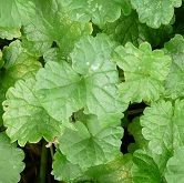 Identifying wild edibles, parts that are edible, how to prepare them. Great site!