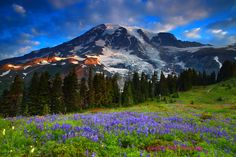 Sunrise Wildflowers and Mt Rainier From Paradise Meadows in Mt R by Randall J  Hodges on 500px