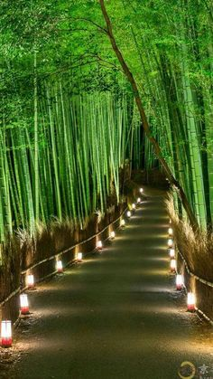 Backyard Landscaping Discover 15 Truly Astounding Places To Visit In Japan - Travel Den Arashiyama Bamboo Forest Japan - 15 Truly Astounding Places To Visit In Japan Beautiful Places In Japan, Beautiful Places To Visit, Cool Places To Visit, Amazing Places, Places To Travel, Beautiful Nature Wallpaper, Beautiful Landscapes, Beautiful Gardens, Japan Landscape