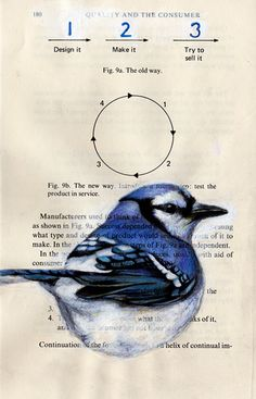 Bluejay_circle123_W by PS pics, via Flickr    Love how these are drawn onto book pages