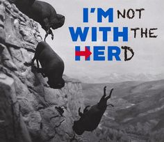 You'll be soooorry. Go over the cliff without me! Anti Hillary, Seth Rich, Jill Stein, Bernie Sanders For President, Voice Of America, Satire, Words, Cliff, Revolution