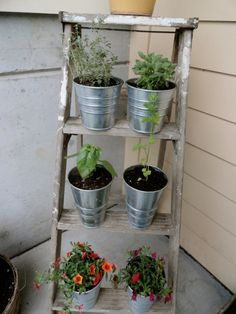 Potted plants on a ladder. I think I might vary the pots a little bit more.