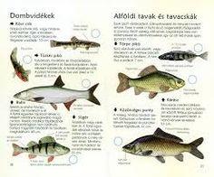 édesvízi halak Guam, Fish, Pets, Animals, Products, Animals And Pets, Animales, Animaux, Animal