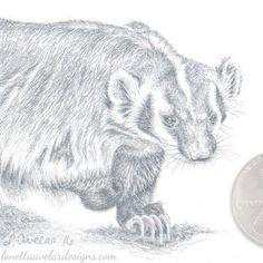 American Badger Art, Original Sketch in Silverpoint, Lodge Decor, Wildlife Sketch, Miniature Artwork, 2x2 Inches