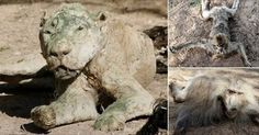 Save the starving animals at the Khan Younis Zoo in Gaza! | YouSignAnimals.org