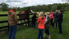 Visit Horse Country: Raising Star Racehorses at Saxony Farm Thoroughbred, Horse Racing, Love Of My Life, Farms, Raising, Horses, Country, Animals, Places To Visit