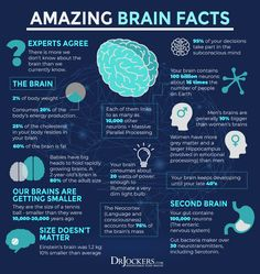 Brain Anatomy, Medical Anatomy, Anatomy And Physiology, Brain Science, Science Facts, Biology Facts, Brain Facts, Endocannabinoid System, Neuroplasticity