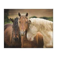 254593273 Tres Amigos Wild Horses Print Unframed Print Horse Pictures, Wild Horses,  Framed Wall Art