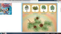 Обучающая игра для детей Учим названия деревьев,их листья и плоды