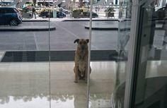 cachorro-aguarda-comissaria-de-bordo-ate-ser-adotado-mapaa