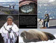 Arctic Cruise - Expedition | Greenland | Travelboecker | Vancouver, Steveston Travel Agent