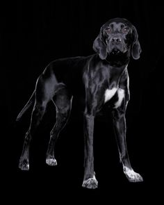 solid black pointer - Google Search