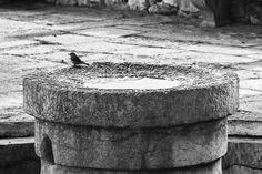 #12.20. Bird bath