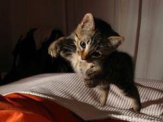 Landen Katzen wirklich immer auf allen Vieren? – Foto: (CC) Flickr/ Fabiancanosa / Fabian Canosa    www.einfachtierisch.de