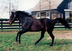Grindstone From The First Crop Of Unbridled. Whole Pedigree Is Made Of Phalaris, Man O' War, And St. Simon. Fifth Dam On Female Side Is 3x4 To A Pair Of Man O' War Sisters And The Sire Of 4th Dam Is A Little Known Son Of Man O' War With Yet Another 3/4 Sister To Man O' War As Third Dam On Female Side. 4x5x5x5 To Fair Play(Man O' War Sire.