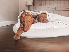 The Cozy Cave Dog Bed is perfect for nervous or chill-prone dogs that need a calming and warm dog bed bed to help improve their rest. I Love Dogs, Cute Dogs, Adorable Puppies, Funny Dogs, Cozy Cave Dog Bed, Outdoor Dog Bed, Cavapoo Puppies, Cool Dog Beds, Dog Park