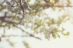 blossom. | Flickr - Photo Sharing!