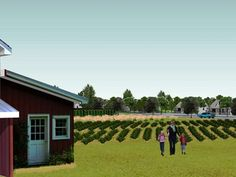 Agriburbia: Will farms replace golf courses as the housing amenity of choice?