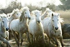 Run away horses