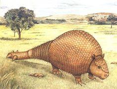 Fóssil de Gliptodonte, descoberto por menino de 12 anos!