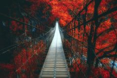 Into a dream by Hanson Mao(毛延延) - Photo 157573021 - Cannabis, Stunning Photography, Surreal Art, Warm Colors, Pretty Pictures, Travel Photos, Paths, Tours, Fine Art