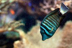 Salt water fish turquoise
