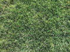 8. Compositional Principles + Elements: The different tonal qualities of the greens adds to the sense of texture. The shape of the grass tuffs also adds to sense of texture.