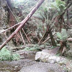 Just another facet of #marrinersfalls  #brownsnake #rainforest #regenwald #australien #australia #reisen #travel #apollobay #wasserfall #waterfall by yoyomaus http://ift.tt/1LQi8GE