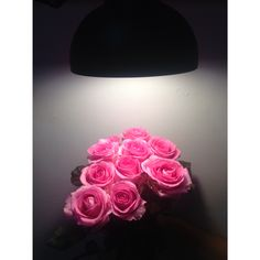 Pinky roses