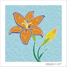 My Lily I colored with the app Colorfy.