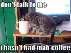 Kitty Coffee