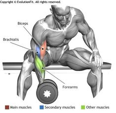 BICEPS - CONCENTRATION DUMBLLE CURL                                                                                                                                                      Plus