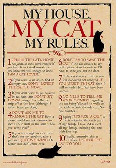 House (Cat) Rules !!!   =^,,^=