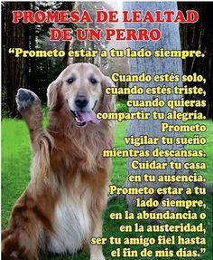Juramento de lealtad de un perro a su AMO!