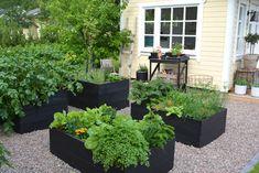 New Homes, Plants, House, Garden Ideas, Outdoors, Gardening, Camping, Google, Blog